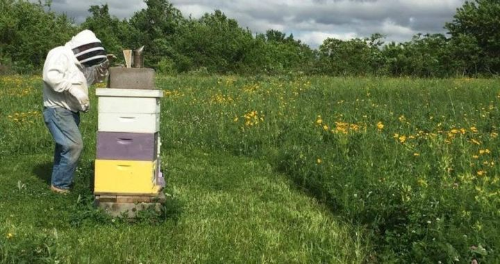 Thinking about your honey? Consider beekeeping