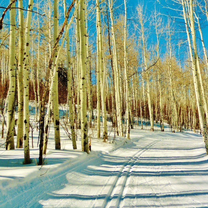 Owl Creek Road Trail, Aspen/Snowmass Village Expressway. MARTIN COONEY