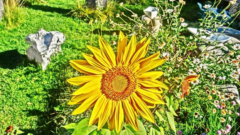 Autumn Daisy. Top O' th' World, left.