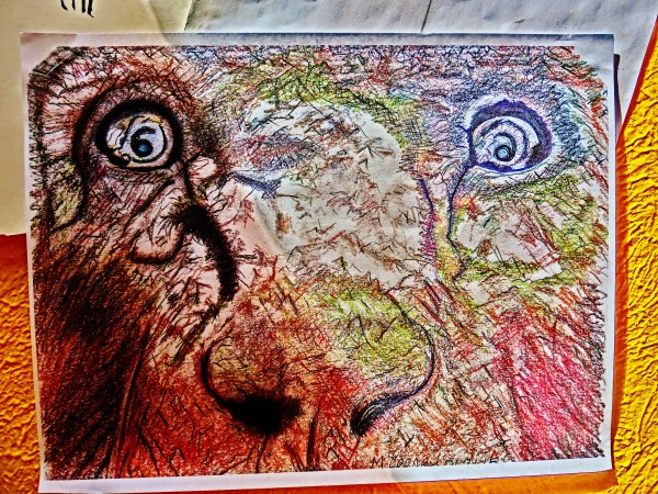 The Curious Lion of Massa, colored pencil, Martin Cooney.