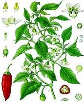 Piment pour les Chilaquiles