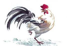 Coq pour Le canard salé froid de Nanjing