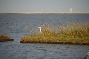 Shoreline Protection Marsh Creation