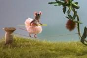 Maggie Rudy - tightrope
