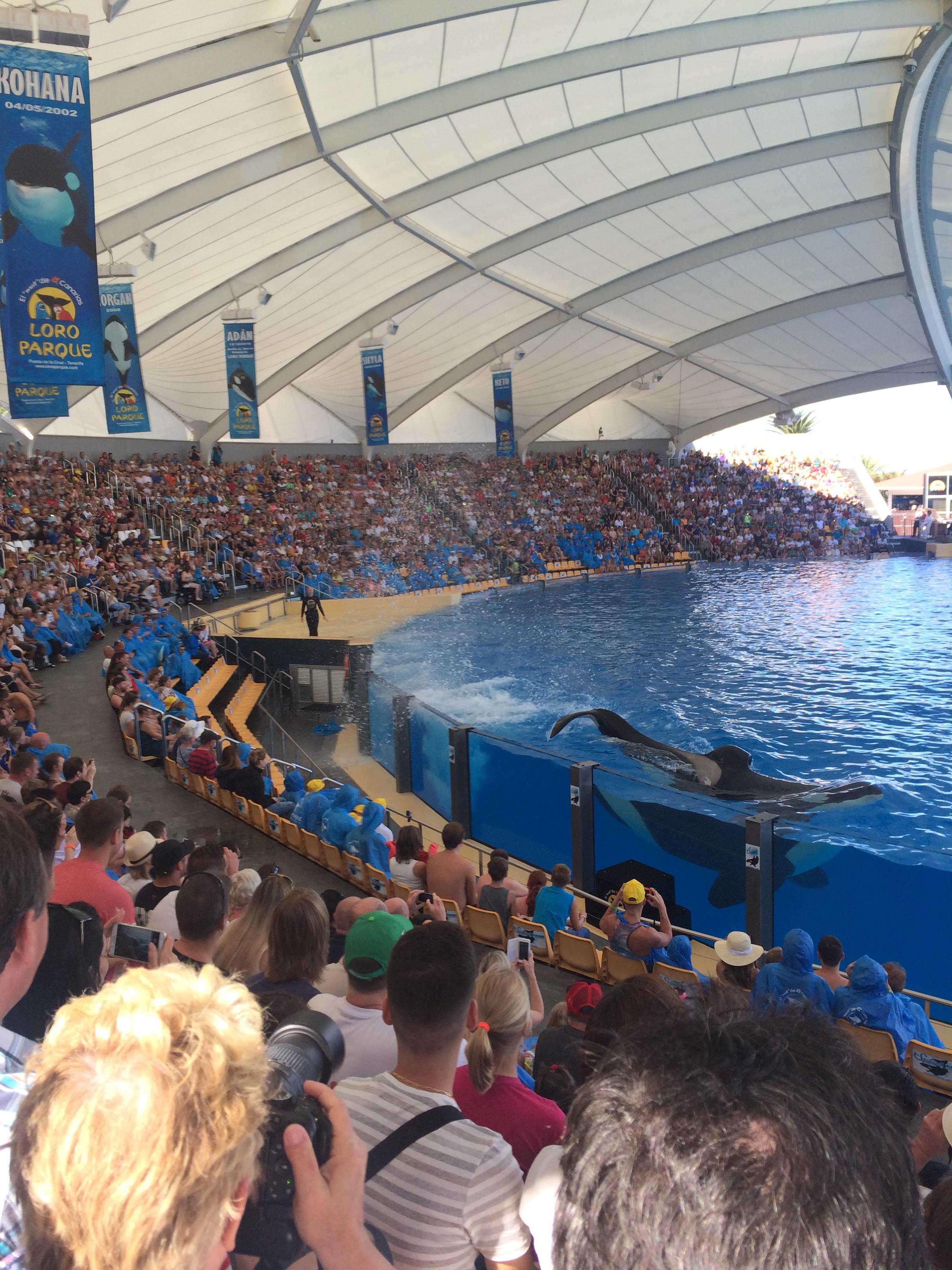 Loro Parque - orcas