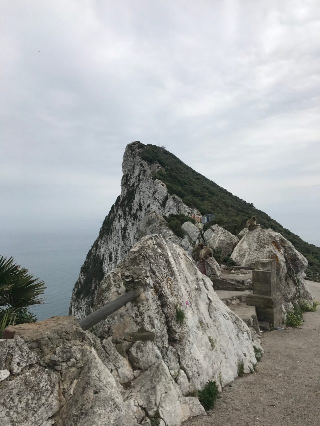 Gibraltar and wildly living makaks