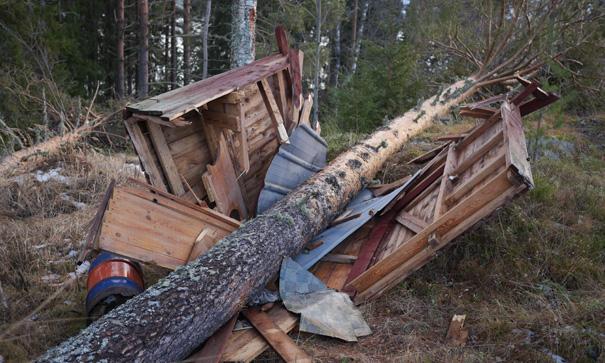 Stormen Ivar fällde en fura över ett utedass