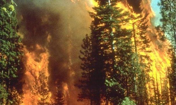 Fasar för skogsbränder