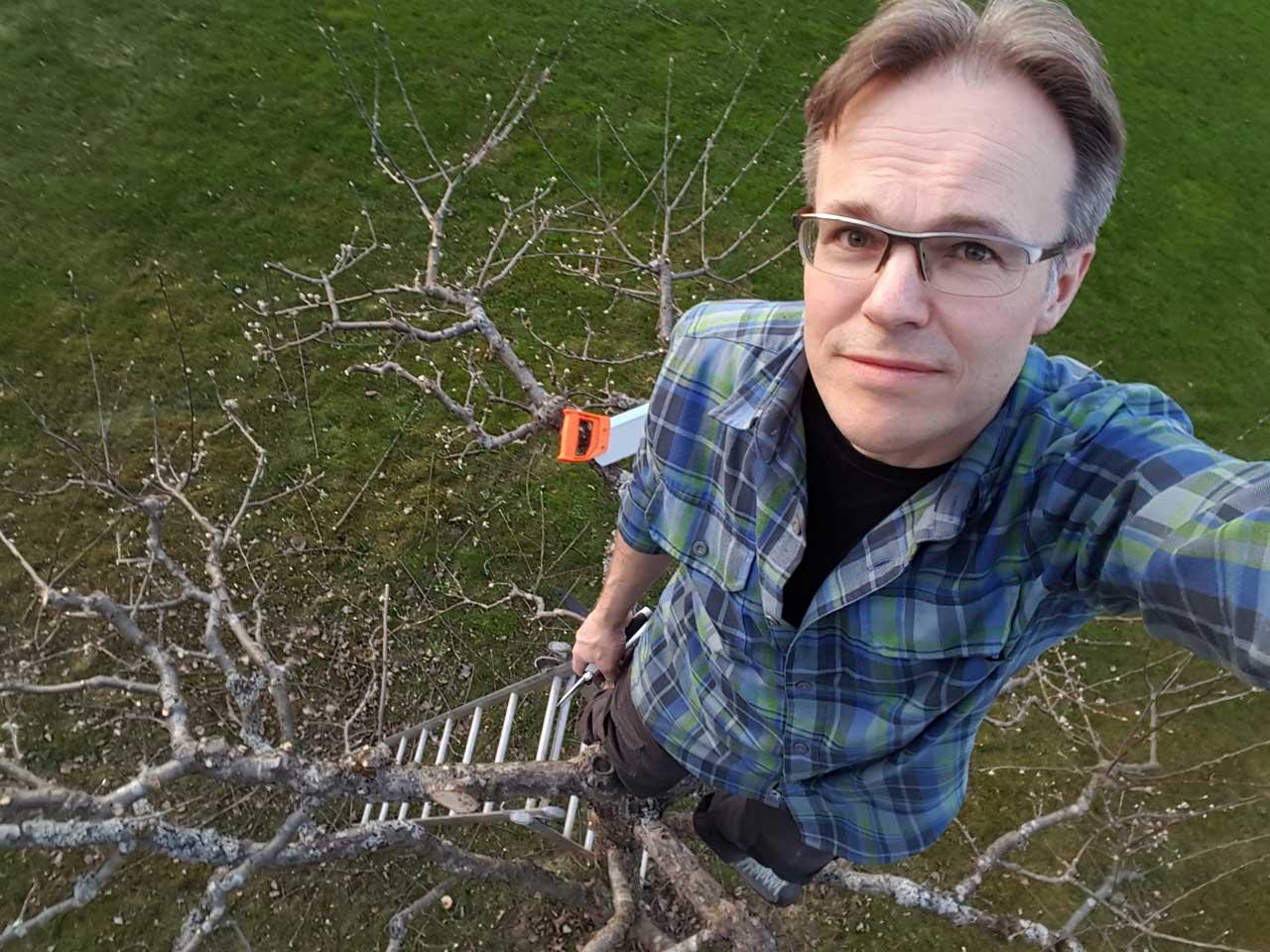 Klippa äppelträden