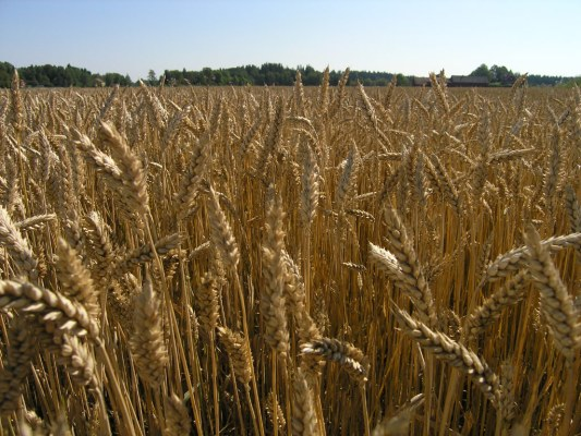 Debattartikel i SvD om mat, klimat och krisberedskap