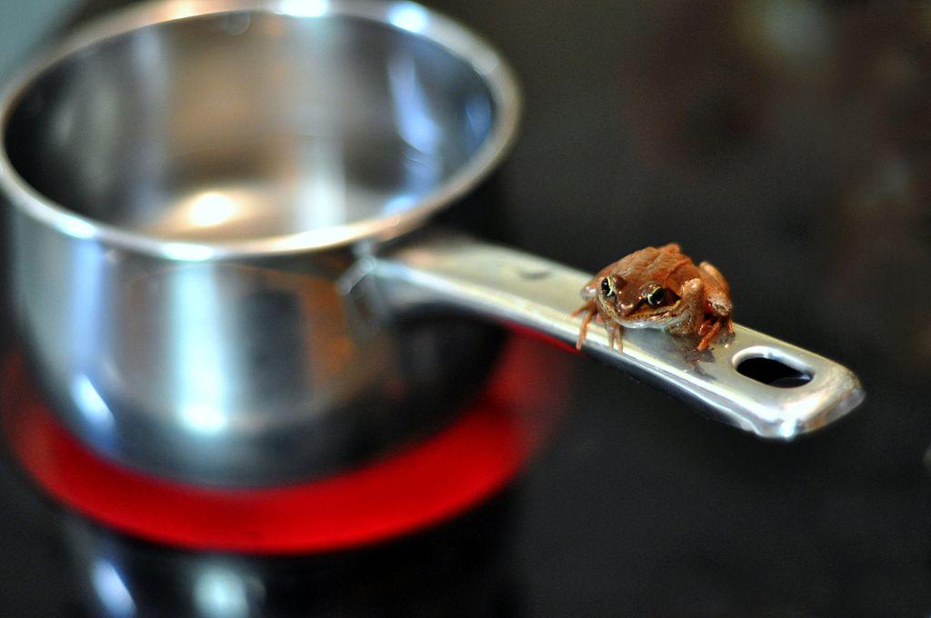 Är grodor smartare än människor?