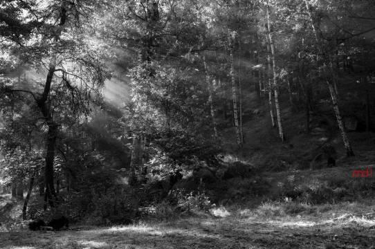 Birchen