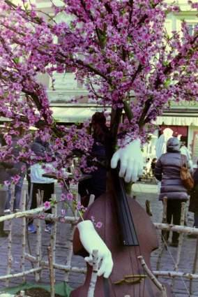 Cellobaum Prag