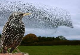 Starling behaviour can be explained as time dilation
