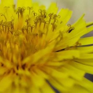 macro foto giallo fiore