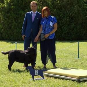 espo labrador club puppy and veteran