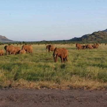 elefanti tsavo est