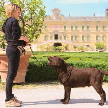 labrador cane e donna