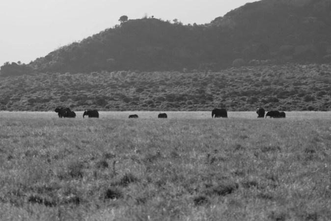 panorama tsavo ovest in bianco e nero