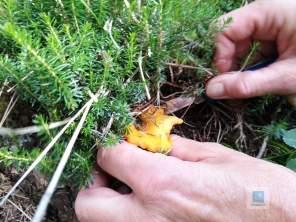 Beim Pilze Ernten