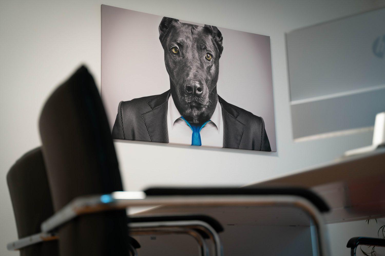 Büro Hund