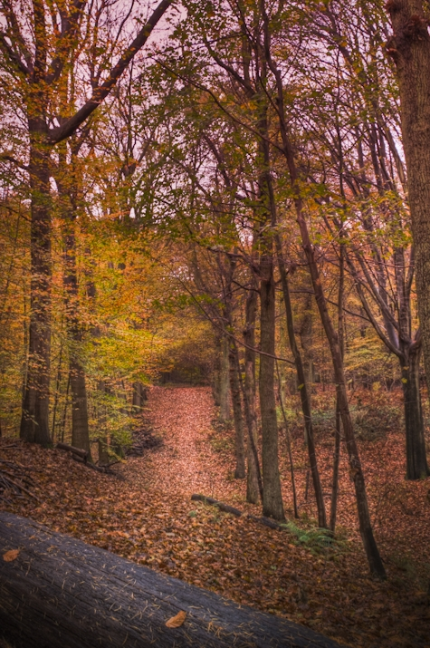 Organized Nature - forest in La Hulpe