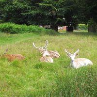 Training for the Highlands - Wandering Around Cheshire's Dunham Massey Deer Park