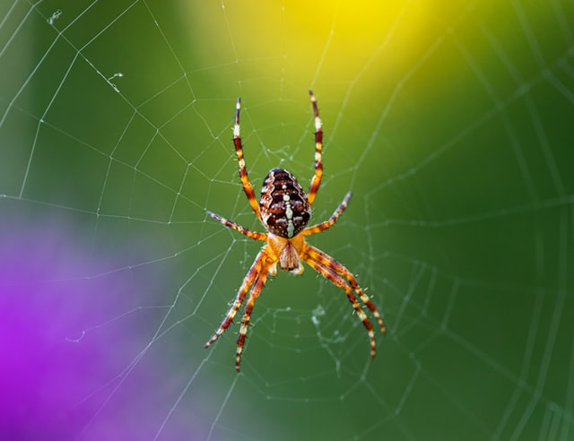 Spider Web as symbolic for ministry traps to avoid