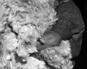 L45311 arm in wool