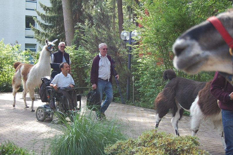 Accessible Llamas in Germany