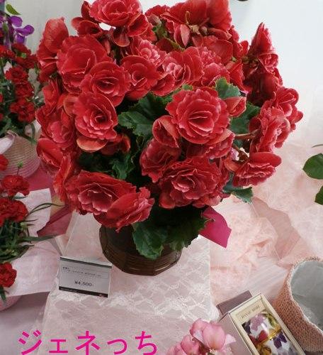 母の日フラワーギフト、2012年イイハナ・ドットコムのおすすめは、先行予約販売がお得です。