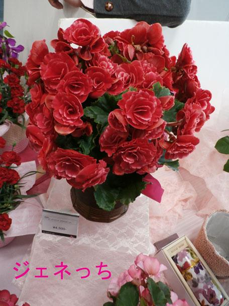 イイハナ2014母の日フェ