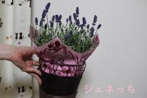 母の日 鉢植え「癒しの天然アロマ ラベンダー アロマティコ(R)」 ラッピングについて