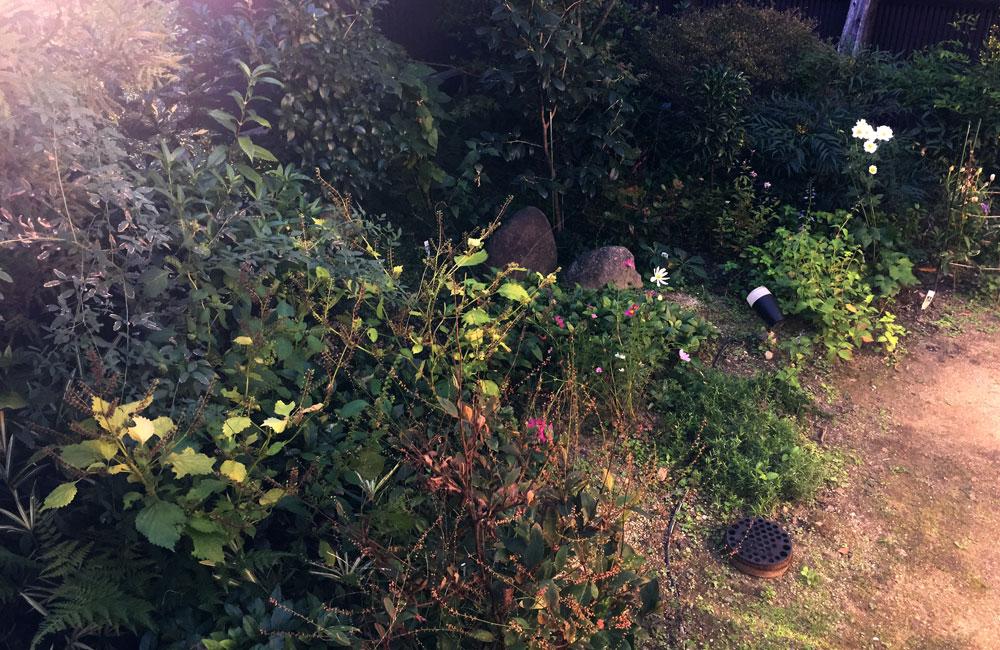 秋の庭11月