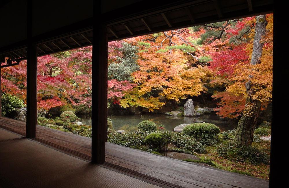 蓮華寺 秋の紅葉