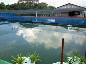 Marugen Koi Farm Singapore