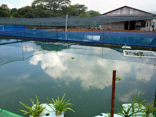 Marugen Koi Farm, Singapore