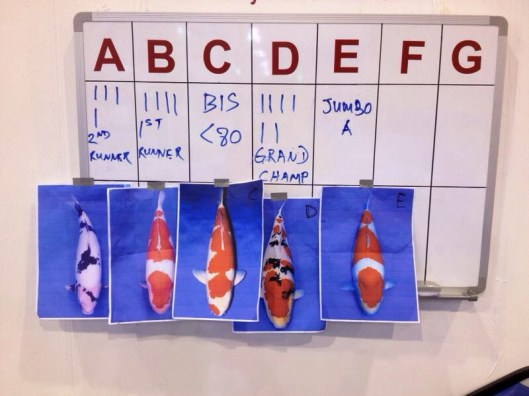 18th Singapore Koi Show & Championship 2014 Grand Champion Contenders
