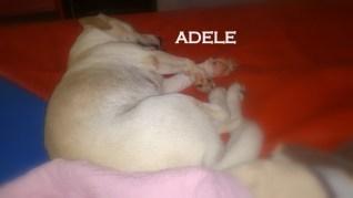 Adele.44