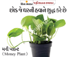 learn-about-10-room-plants-suggested-by-nasa