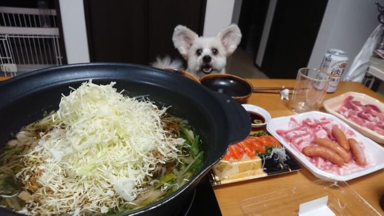 しゃぶしゃぶキャベツ鍋とミック犬