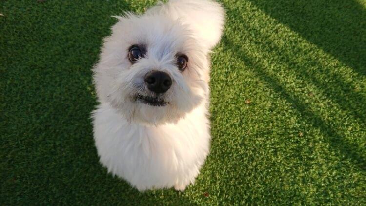 可愛い笑顔のミックス犬