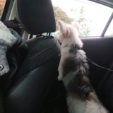 車から顔を出すミックス犬