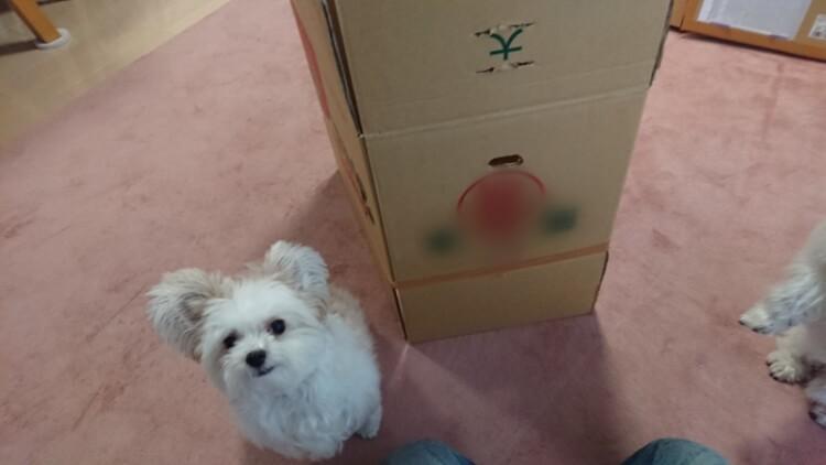 段ボールとミックス犬