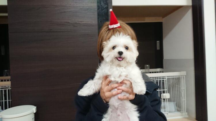 お母さんに抱っこされるミックス犬