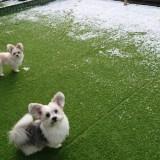 お庭に積もった雪とミックス犬