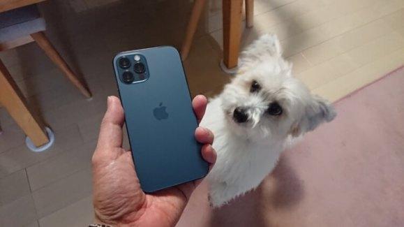 iPhone12とミックス犬