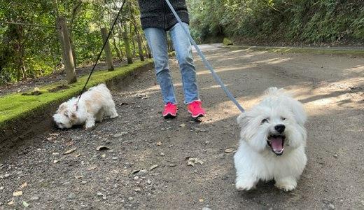 iPhone12Pro持って山道お散歩