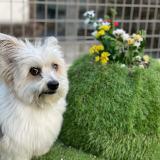 ミックス犬と造花