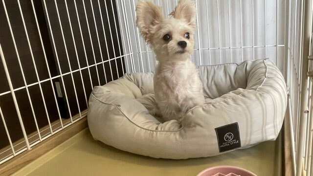 ニトリのホテルスタイルのペットベッドに座るミックス犬